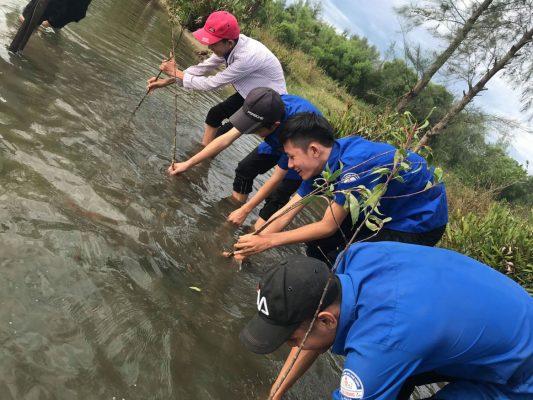 Trong 10 000 Cay Rung Ngap Man Huong Ung Chu Nhat Xanh 173 2